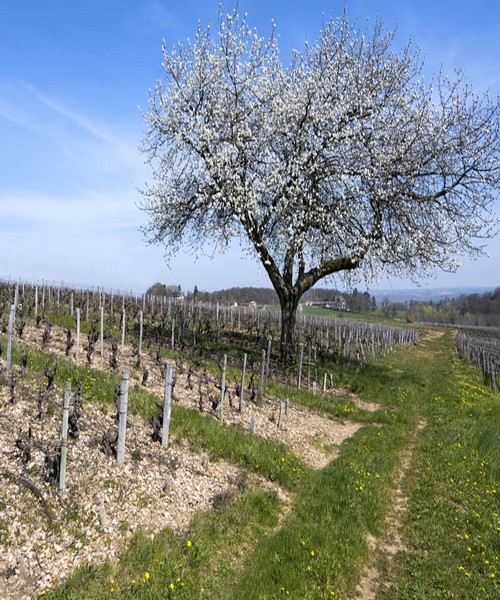 Beaujolais-Printemps-0063web1
